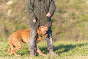 Top 8 Health Benefits from Owning a Vizsla