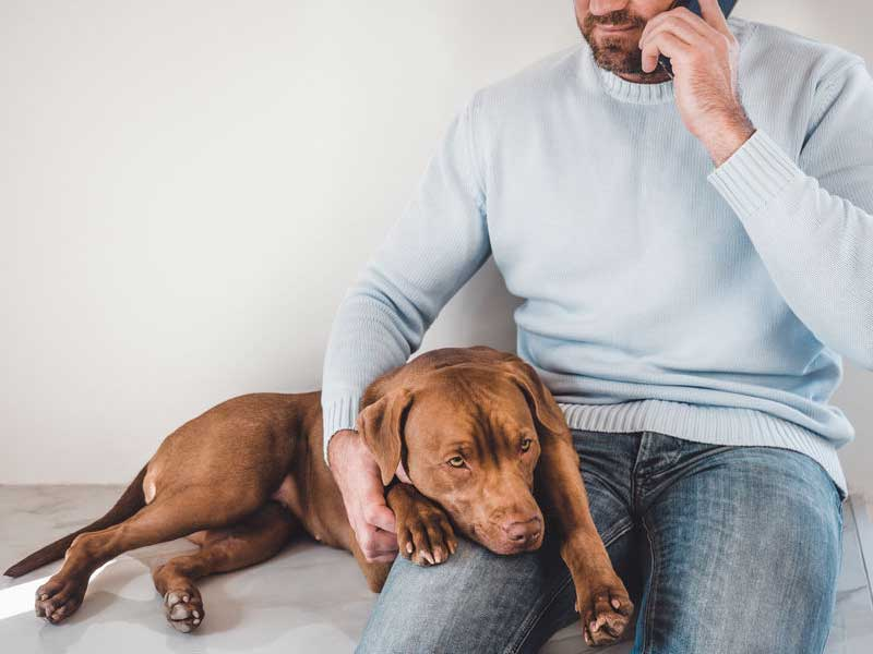 Can a Vizsla Be Left Home Alone?