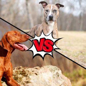 Vizsla vs Catahoula Leopard Dog